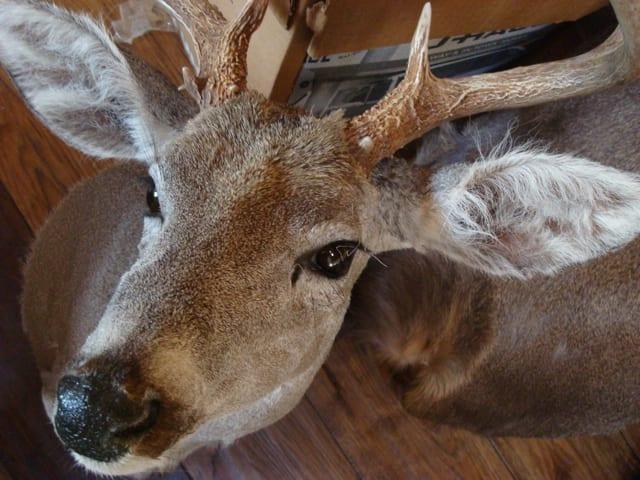 creepy-deerheads