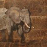 elephant-on-elephant